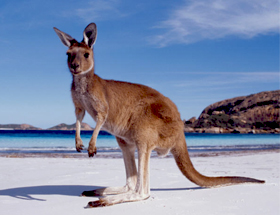 Destination_Kangaroo